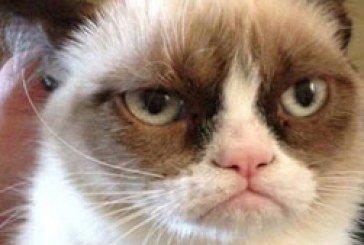 Найзліший кіт став головним інтернет-мемом року