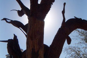Люди – деревам: залишайтеся з нами
