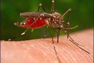 На Заході України комарі «гризуть» людей, влаштовуючи «бійки» за кров