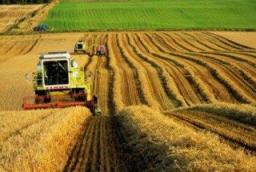 Україна цьогоріч збере один із найбільших урожаїв зерна за період незалежності