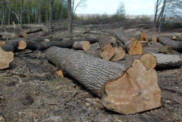 Реальна вирубка лісу в 28 разів перевищує офіційні дані