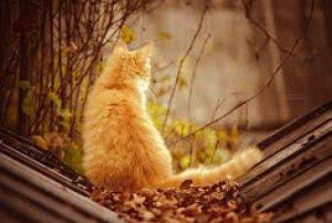 Осінній кіт або Казкова історія для дорослих