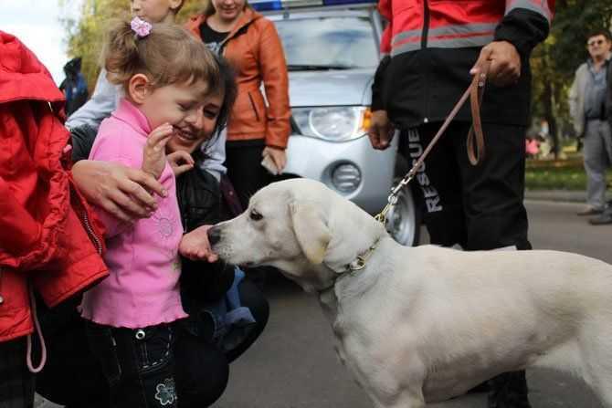 Собака-рятувальник Бім