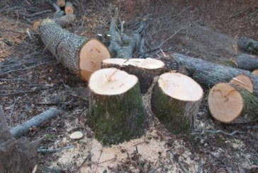 У Тернополі в парку «Загребелля» незаконно вирубали дерева