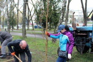 Сто дерев у вигляді числа сто: у Тернополі висадили гай Небесної сотні
