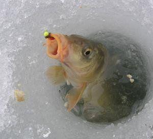Дайте рибі перезимувати. І ракам теж