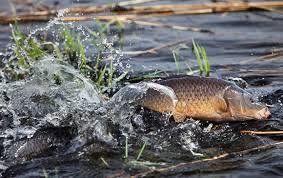 Першоквітневий не жарт Тернопільської рибоохорони