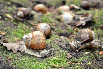 Як українські равлики мандрують до Європи (ФОТО)