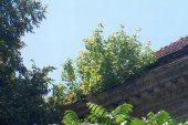 Тернопільська владо, підніми очі до неба: на «Україні» виросли дерева (ФОТО)
