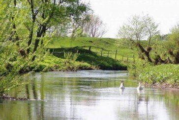 Де на Тернопільщині уже не можна ловити рибу