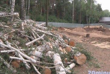 Бізнесмен з Буковини, що захопив чималий шмат землі в заказнику на Тернопільщині, ігнорує суд