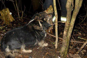 Бучацькі рятувальники звільнили з пастки собаку – у «полоні» тварина пробула майже два дні (ФОТО, ВІДЕО)