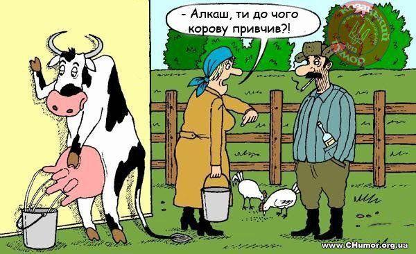 Українські анекдоти. - Моя дружина хоче схуднути і тепер регулярно їздить верхи...