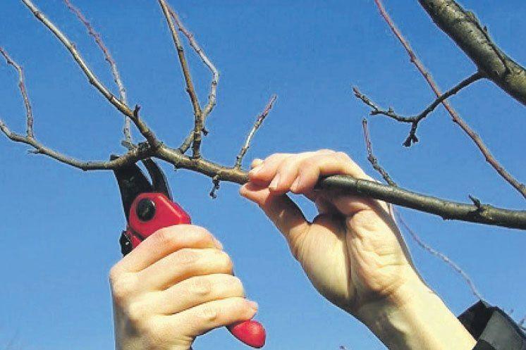 обрізання дерев