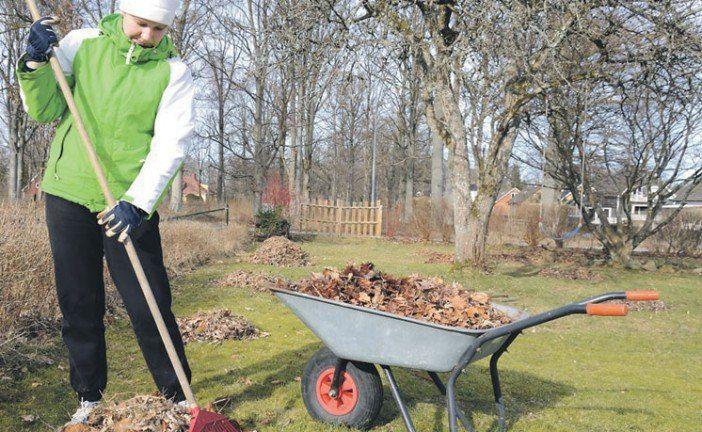 Готуємо сад до зими