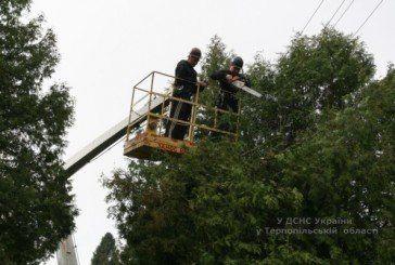 Рятувальники провели толоку на території теребовлянського військово-патріотичного центру «Миротворець» (ФОТО, ВІДЕО)