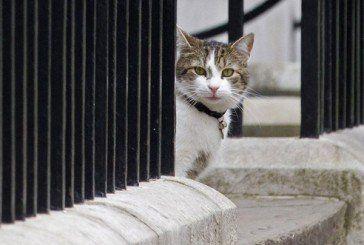 МЗС Британії працевлаштувало бездомного кота