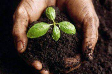 Земельний податок: ставки для справляння