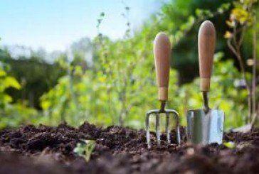 Сад і дача подовжують життя