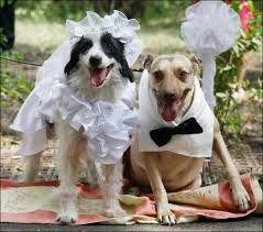В Індії собаче весілля зібрало тисячі гостей