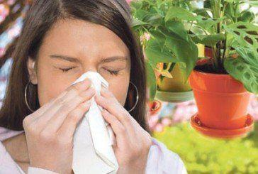 Які кімнатні рослини можуть викликати алергію