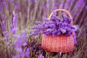 Щоб у саду квітла лаванда