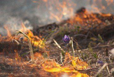 На Збаражчині через спалювання сухої трави ледь не згоріло 10 гектарів кукурудзи