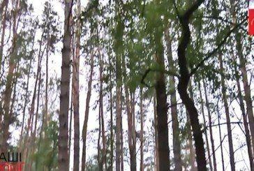 Відеорозлідування як українські можновладці нахабно приватизують величезні масиви лісів