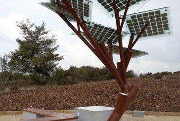 На набережній Тернопільського ставу встановлять «сонячні дерева»