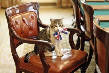 Прем'єр-міністр Британії передав свого кота у спадок