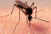 Як швидко вилікувати укуси комарів: 5 порад
