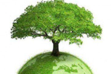 На Тернопільщині приголомшливими темпами знищуються полезахисні лісосмуги