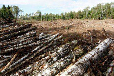 Третини лісів у нашій країні формально не існує