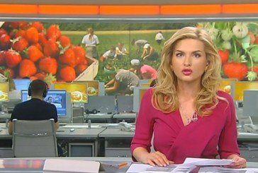 Ягідний бізнес на Кременеччині: малина та полуниця на експорт (ВІДЕО)