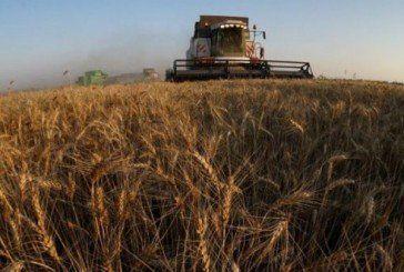 «Урожаєм» – по несплачених податках: на Тернопільщині перевіряють сільськогосподарські підприємства