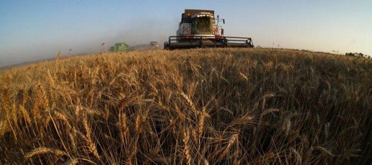 Кукурудзу та пшеницю з Тернопільщини вже незабаром зможуть експортувати у США