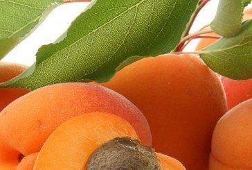 Персиково-абрикосовий рай