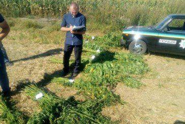 Житель Бережан замаскував наркотичне зілля в кукурудзі (ФОТО)