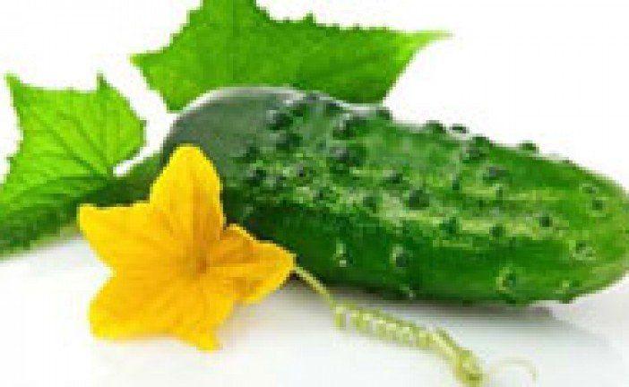 Поливаємо огірки сироваткою: рецепти народних добрив та користь для овочів молочних продуктів