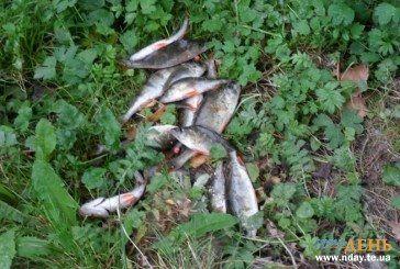 На Тернопільщині у Збручі отруїли рибу (ФОТО)