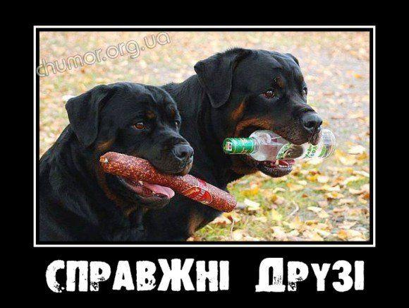spravzhni_druzi-580x436