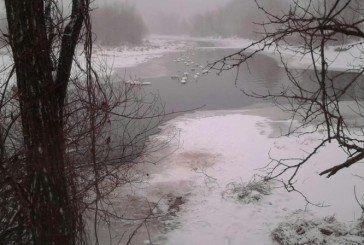 На Тернопіллі зимують сотні лебедів (ФОТО)