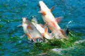 Тернопільських рибалок засмутили: одна вудка, один гачок… І так аж до 11 червня