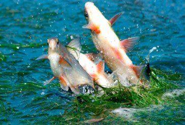 Де на Тернопільщині дозволено ловити рибу під час нересту?