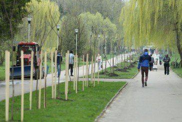 У Тернополі висадили алею «Файного міста» (ФОТО)