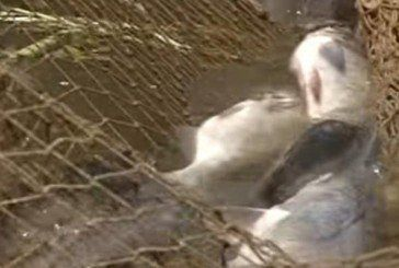 На Тернопільщині за минулі вихідні вилучили 77 кг «незаконної» риби
