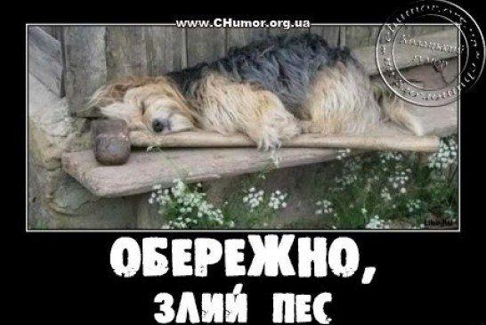 Українські анекдоти: Жінка телефонує чоловікові...