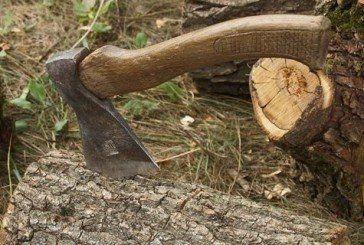 Жителя Шумщини судитимуть за крадіжку дров