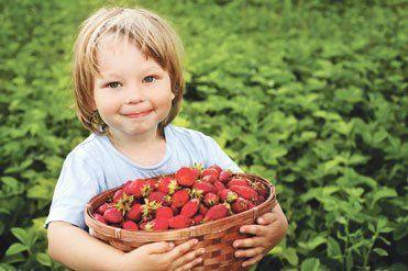 Про урожай полуниць подбайте у серпні