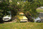 У Тернополі, на вулиці Крушельницької, дерево впало одразу на три автівки (ФОТОФАКТ)
